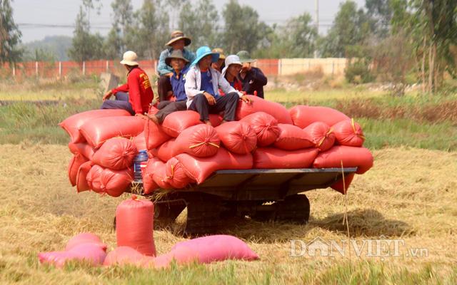 Sau đề xuất tiếp tục xuất khẩu gạo: Thị trường lúa gạo lại sôi động - Ảnh 3.