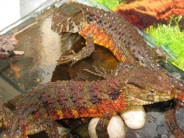 Loài vật lạ và hiếm này có nguy cơ tuyệt chủng tại Việt Nam - Ảnh 2.