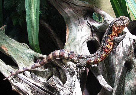 Loài vật lạ và hiếm này có nguy cơ tuyệt chủng tại Việt Nam - Ảnh 4.