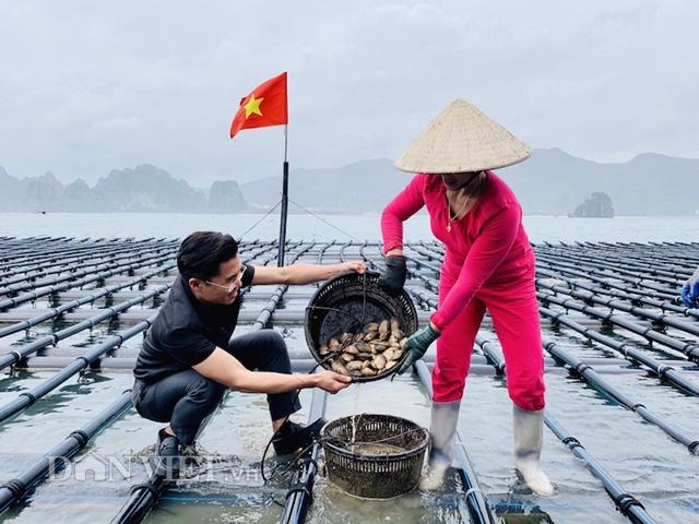 Dịch Covid-19: Quảng Ninh kêu gọi TKV tiêu thụ ngao, hàu cho ngư dân - Ảnh 5.