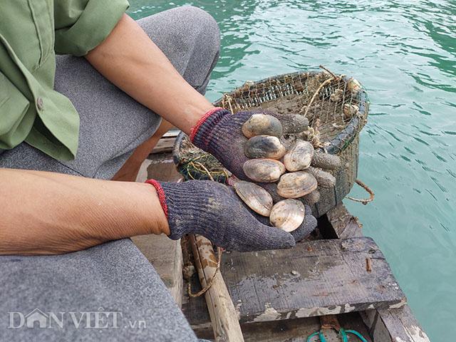 Dịch Covid-19: Quảng Ninh kêu gọi TKV tiêu thụ ngao, hàu cho ngư dân - Ảnh 2.