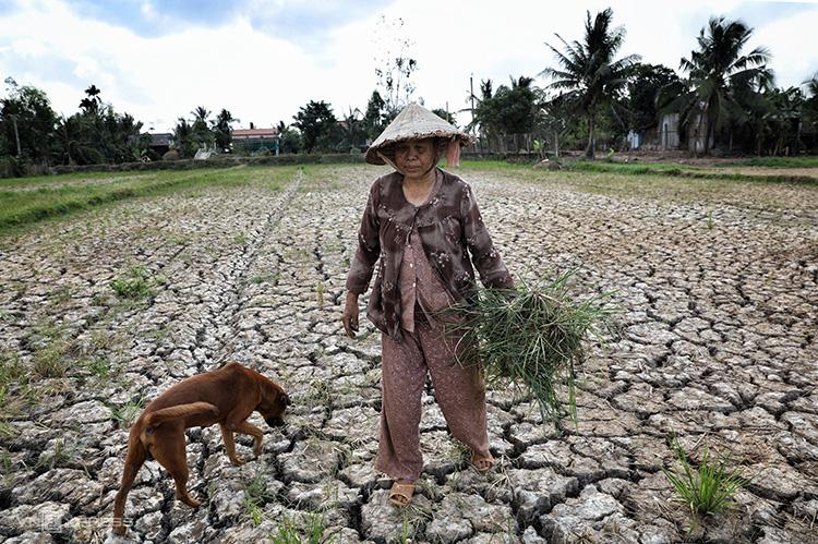 Hạn mặn chưa từng thấy, 5 tỉnh miền Tây công bố tình huống khẩn cấp - Ảnh 1.