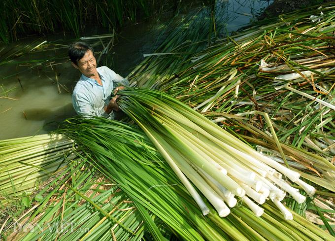 U Minh-vùng đất xa xôi mà hấp dẫn vô số đặc sản ngon nức tiếng - Ảnh 3.
