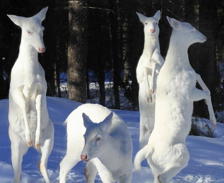 Thế giới của những con vật bước ra từ thần thoại - Ảnh 12.