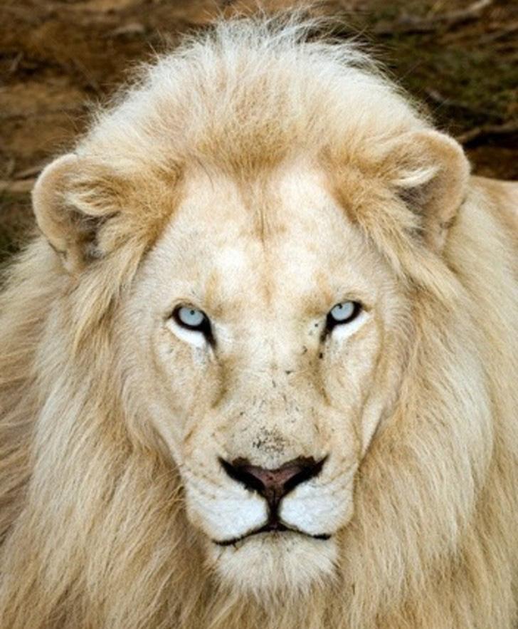 Thế giới của những con vật bước ra từ thần thoại - Ảnh 1.