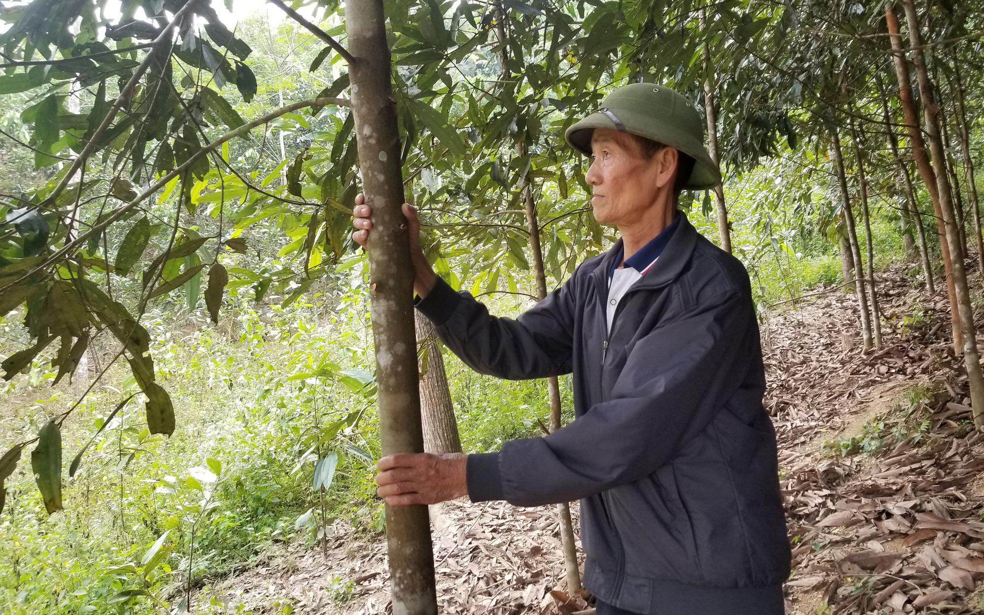 Lạng Sơn: Xây dựng vùng trồng quế, hồi hữu cơ xuất khẩu