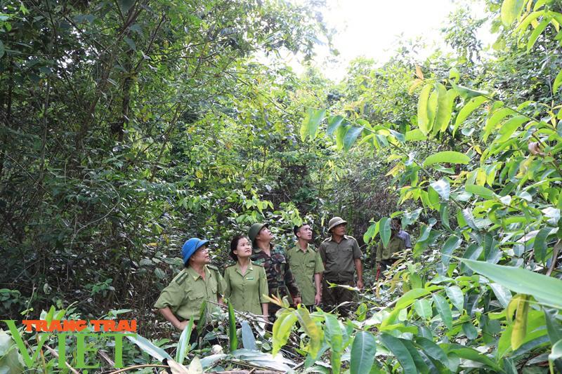 Chuyện giữ rừng trên đỉnh Tà Xùa - Ảnh 2.