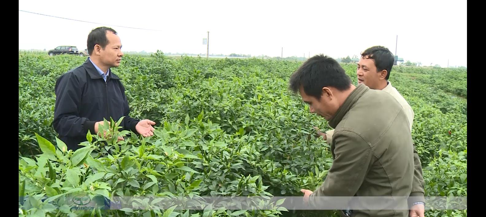 Kỹ sư điện đam mê nông nghiệp, thu tiền tỷ nhờ sản xuất phân bón hữu cơ - Ảnh 4.