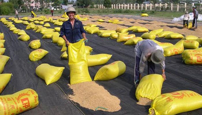 Phát hành lại hồ sơ đấu thầu gạo dự trữ quốc gia  - Ảnh 1.