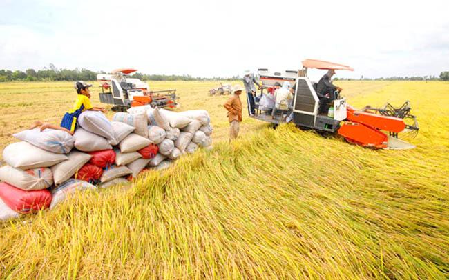 Xuất khẩu gạo: Giờ là lúc chuẩn bị vụ lúa Hè – Thu - Ảnh 2.