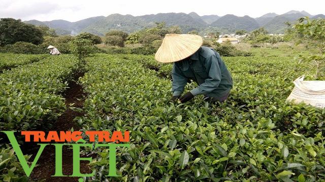 Mộc Châu phát triển nông nghiệp hữu cơ, hướng đi bền vững cho nông dân  - Ảnh 6.
