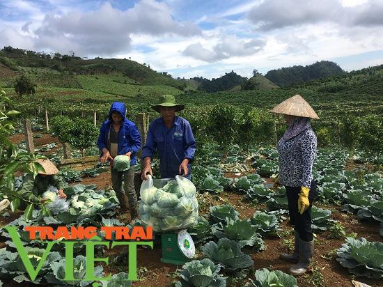 Mộc Châu phát triển nông nghiệp hữu cơ, hướng đi bền vững cho nông dân  - Ảnh 4.