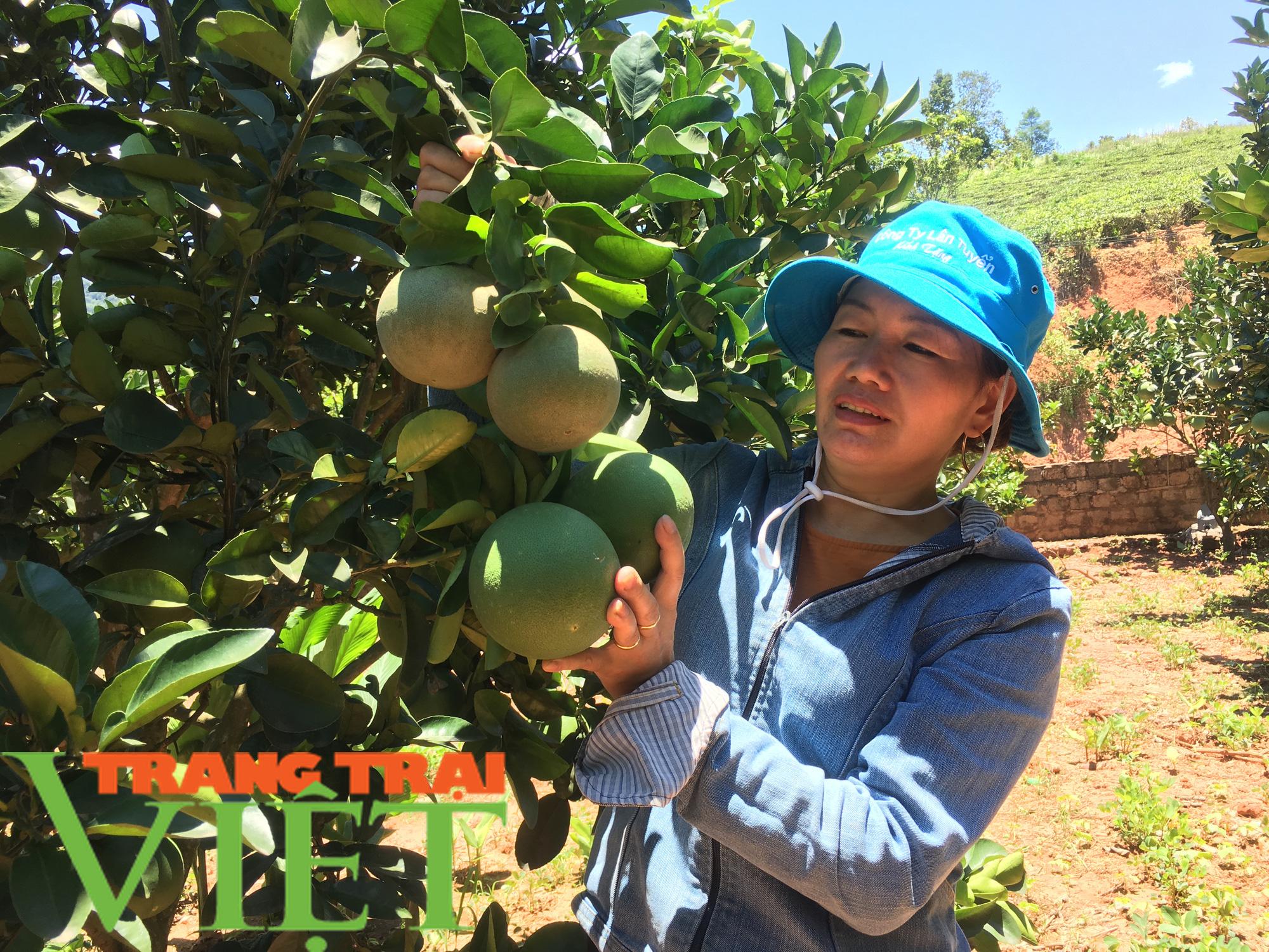 Mộc Châu phát triển nông nghiệp hữu cơ, hướng đi bền vững cho nông dân  - Ảnh 3.