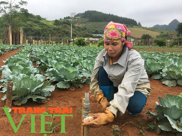 Mộc Châu phát triển nông nghiệp hữu cơ, hướng đi bền vững cho nông dân  - Ảnh 2.