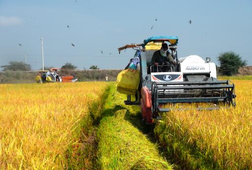 Xuất siêu nông sản tăng gần 50% bất chấp dịch Covid-19 - Ảnh 1.
