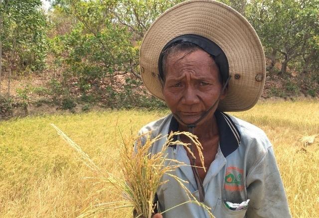 Ninh Thuận: Nắng như rang, dân khổ sở tìm nước uống cho dê, bò - Ảnh 1.