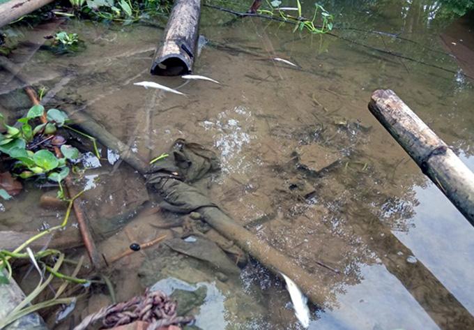 Cá sông Mã chết dạt vào bờ - Ảnh 2.