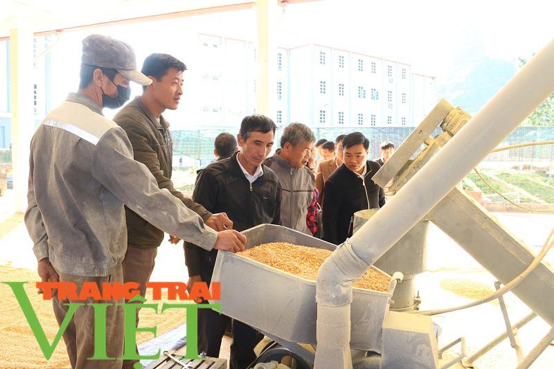 Hội Nông dân Sơn La cầm tay chỉ việc hội viên phát triển kinh tế - Ảnh 7.