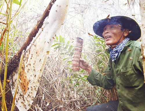 Thợ gác kèo ong rừng U Minh tiết lộ cách làm mắm ong non lạ miệng - Ảnh 1.