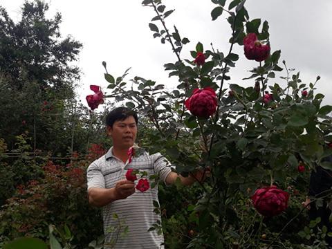 Hải Phòng: Trồng nhiều loài hoa hồng quý hiếm, bỏ túi tiền tỷ/năm - Ảnh 4.