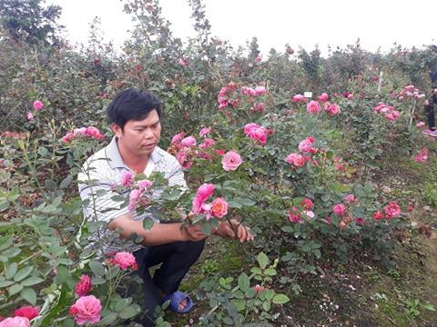 Hải Phòng: Trồng nhiều loài hoa hồng quý hiếm, bỏ túi tiền tỷ/năm - Ảnh 5.