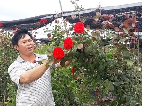 Hải Phòng: Trồng nhiều loài hoa hồng quý hiếm, bỏ túi tiền tỷ/năm - Ảnh 1.