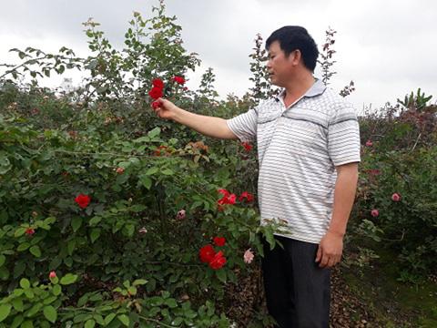 Hải Phòng: Trồng nhiều loài hoa hồng quý hiếm, bỏ túi tiền tỷ/năm - Ảnh 3.