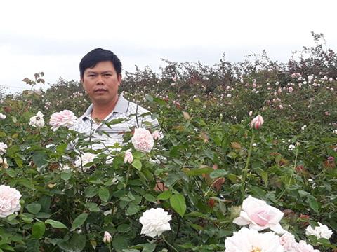 Hải Phòng: Trồng nhiều loài hoa hồng quý hiếm, bỏ túi tiền tỷ/năm - Ảnh 2.