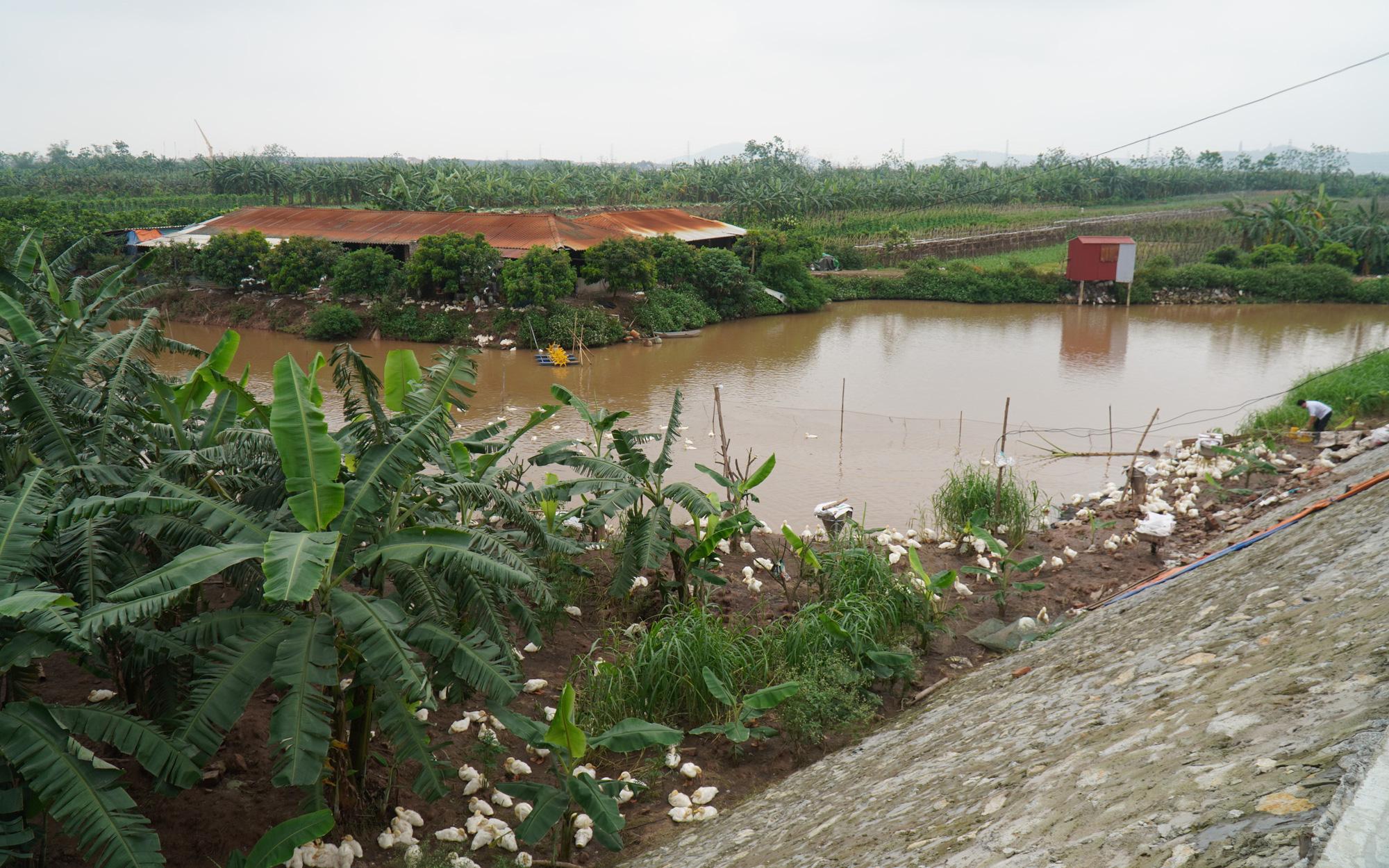 Tổng cục PCTT: Dự án sân golf Thuận Thành chỉ được xây dựng 5% diện tích bãi sông