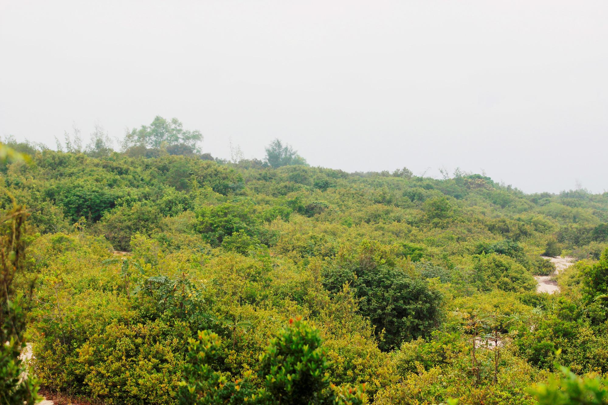 Rừng trâm bầu cổ thụ, gần 500 tuổi ở thôn Thanh Bình, xã Quảng Xuân, huyện Quảng Trạch, tỉnh Quảng Bình. Ảnh: PV