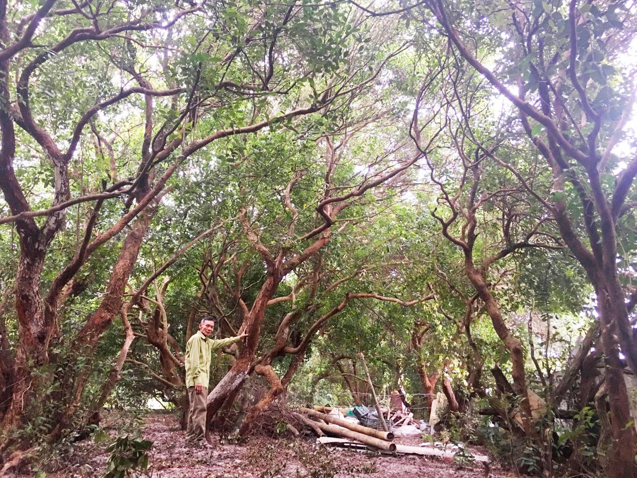 Bao thế hệ người dân thôn Thanh Bình gìn giữ rừng trâm bầu,