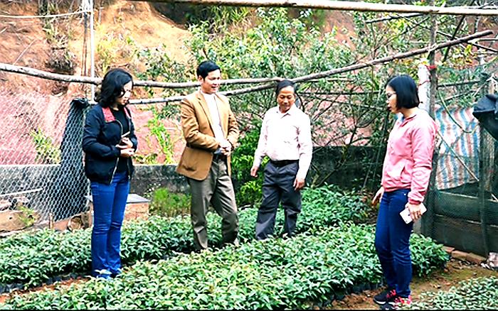 Lão nông đem cây rừng về vườn nhà, cấy ghép chăm bẵm bán 50.000/cây giống - Ảnh 3.
