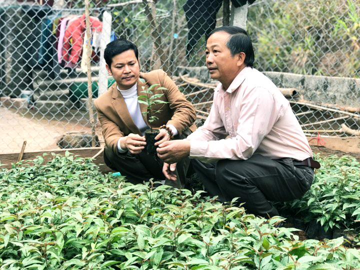Lão nông đem cây rừng về vườn nhà, cấy ghép chăm bẵm bán 50.000/cây giống - Ảnh 1.