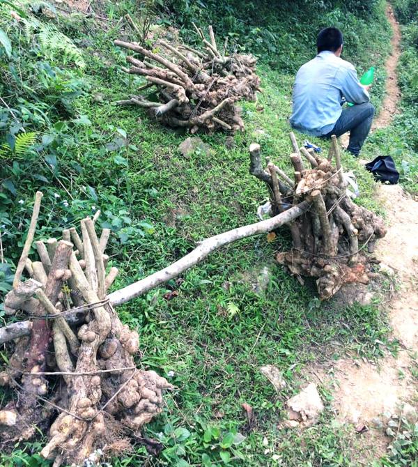 """Lạng Sơn: Xuất hiện tình trạng người dân """"phá núi, xẻ rừng"""" săn cây cảnh  - Ảnh 3."""