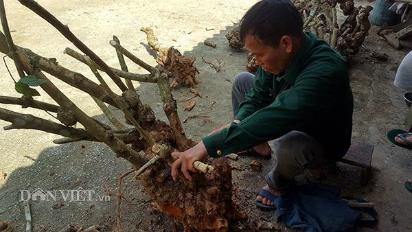 """Lạng Sơn: Xuất hiện tình trạng người dân """"phá núi, xẻ rừng"""" săn cây cảnh  - Ảnh 1."""