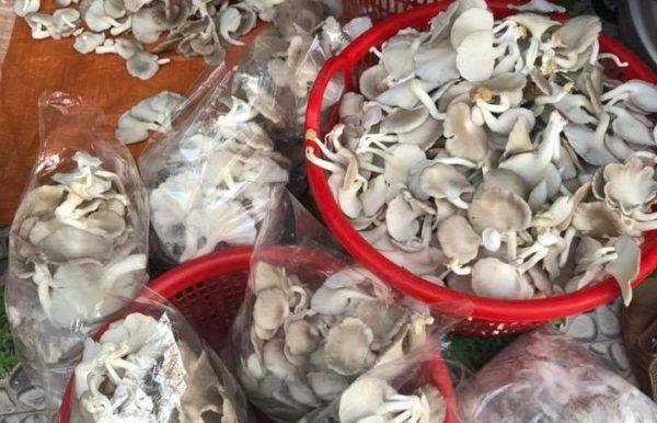 Quảng Nam: U40 xứ Quảng trồng nấm sò thu tiền rủng rỉnh quanh năm - Ảnh 6.