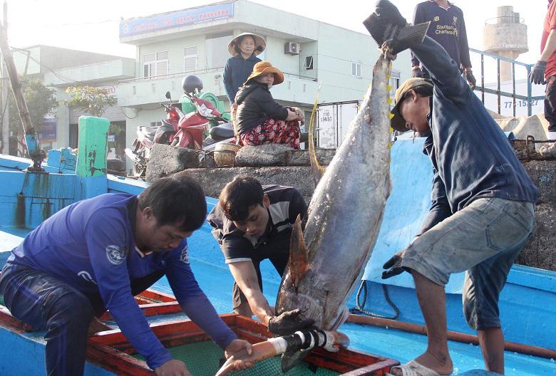 """Tháo gỡ """"thẻ vàng"""" của EC đối với thủy sản Việt Nam: Bình Định """"gắng hết sức"""" - Ảnh 3."""