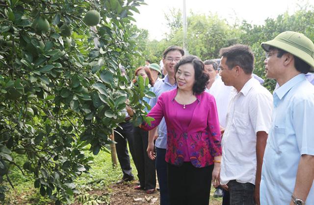 Hà Nội tăng tốc phát triển nông nghiệp - Ảnh 2.