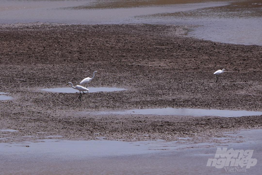 Hồ nước ngọt lớn nhất miền Tây cạn rặc, dân xuống mò cua bắt ốc kiếm sống qua ngày - Ảnh 7.