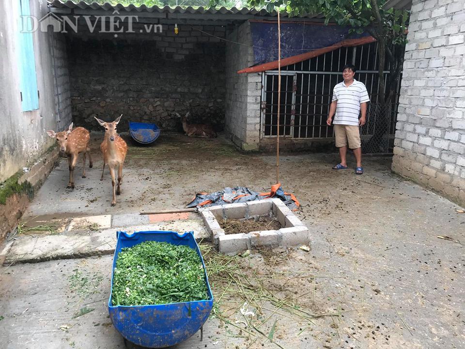 Bỏ công nhân về nuôi hươu lấy nhung, 9X Bắc Giang có thu nhập 200 triệu/năm  - Ảnh 6.