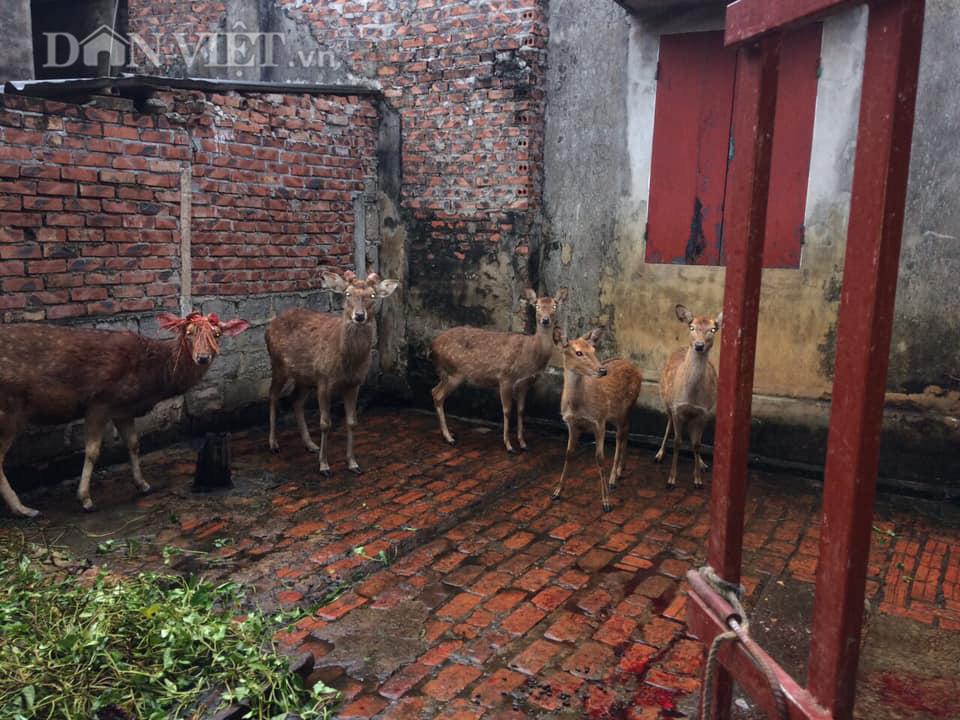 Bỏ công nhân về nuôi hươu lấy nhung, 9X Bắc Giang có thu nhập 200 triệu/năm  - Ảnh 3.