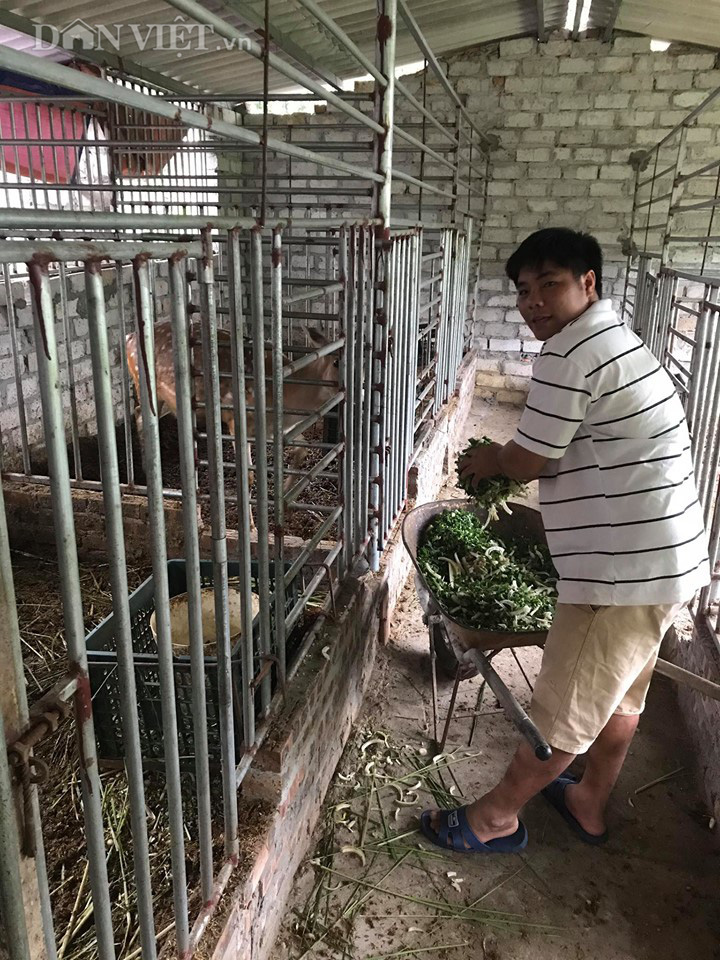 Bỏ công nhân về nuôi hươu lấy nhung, 9X Bắc Giang có thu nhập 200 triệu/năm  - Ảnh 1.