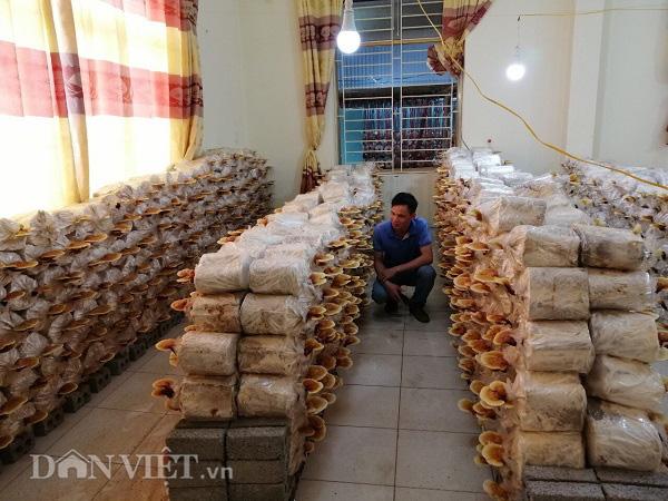 Thu gần 10 triệu đồng mỗi ngày nhờ trồng nấm - Ảnh 7.