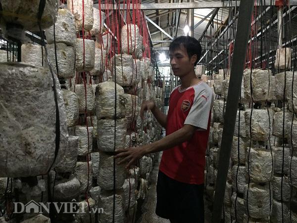 Thu gần 10 triệu đồng mỗi ngày nhờ trồng nấm - Ảnh 2.
