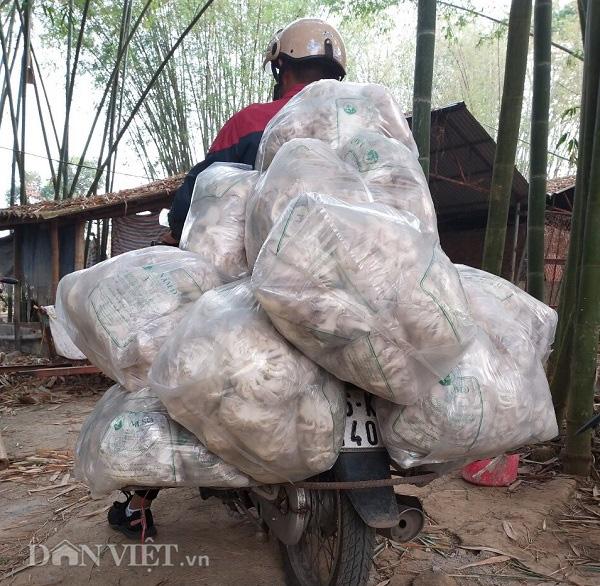 Thu gần 10 triệu đồng mỗi ngày nhờ trồng nấm - Ảnh 4.