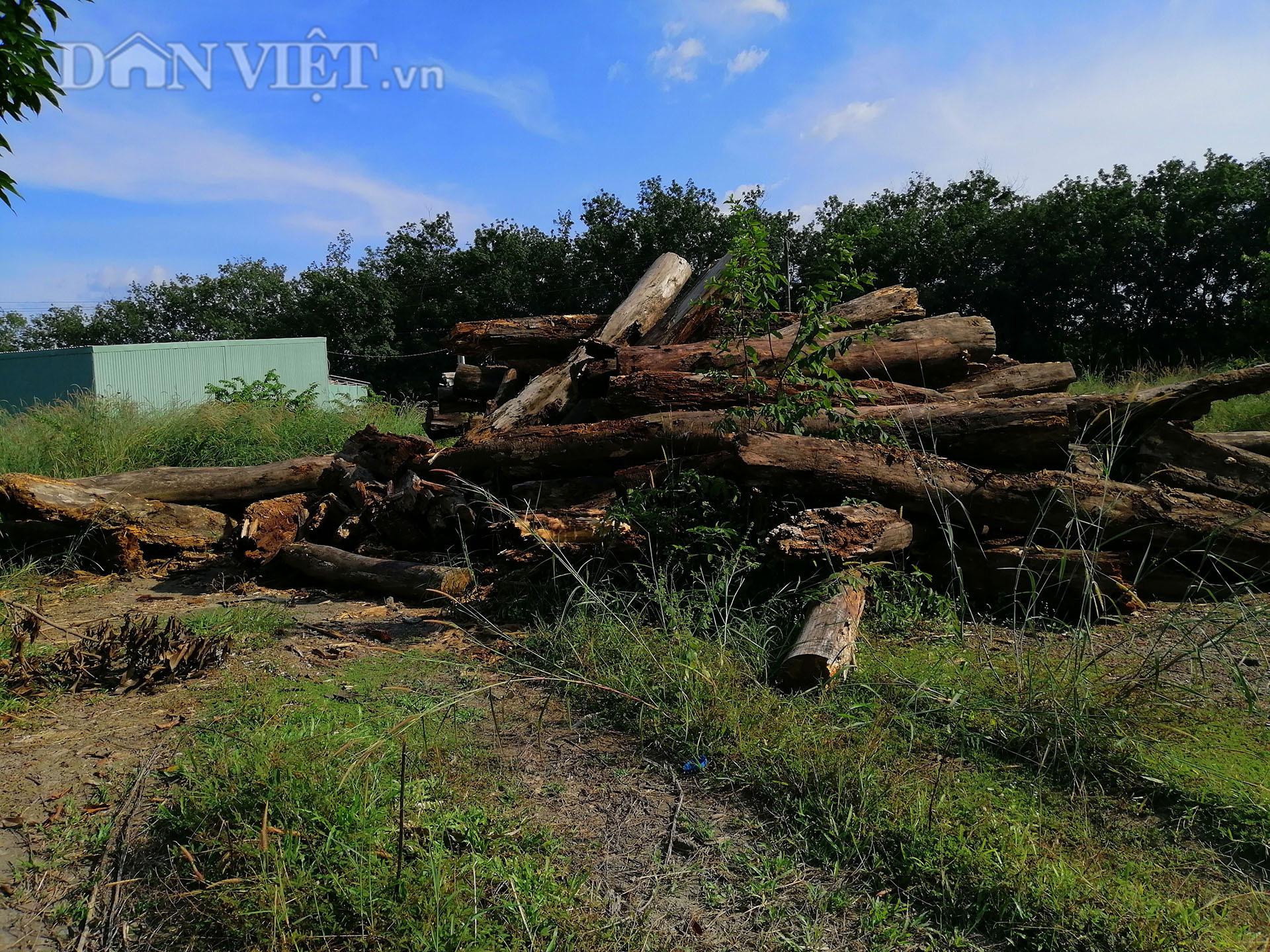 """Bình Phước kiểm tra dự án """"khủng"""" bảo vệ rừng, bị tố có nhiều sai phạm - Ảnh 3."""