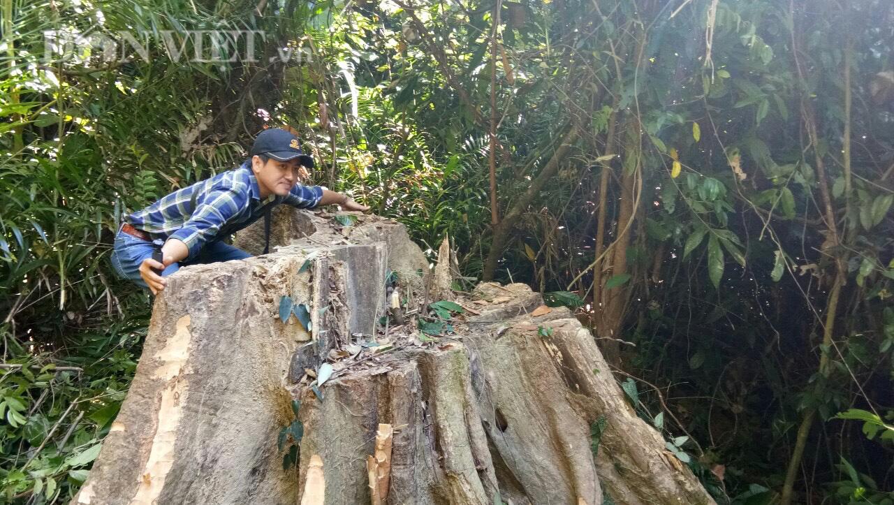 """Bình Phước kiểm tra dự án """"khủng"""" bảo vệ rừng, bị tố có nhiều sai phạm - Ảnh 1."""