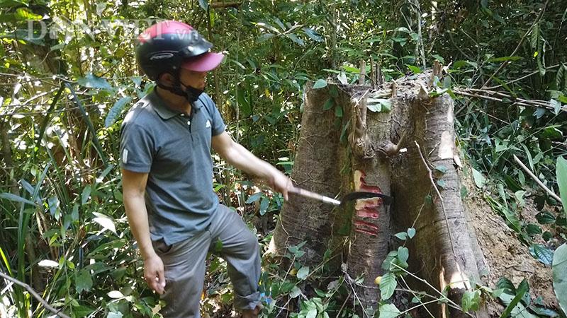 """Bình Phước kiểm tra dự án """"khủng"""" bảo vệ rừng, bị tố có nhiều sai phạm - Ảnh 5."""