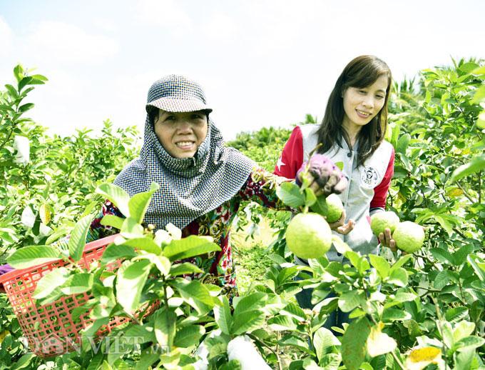Từ công nhân trở về quê trồng ổi, rau thu nửa triệu/ngày - Ảnh 1.