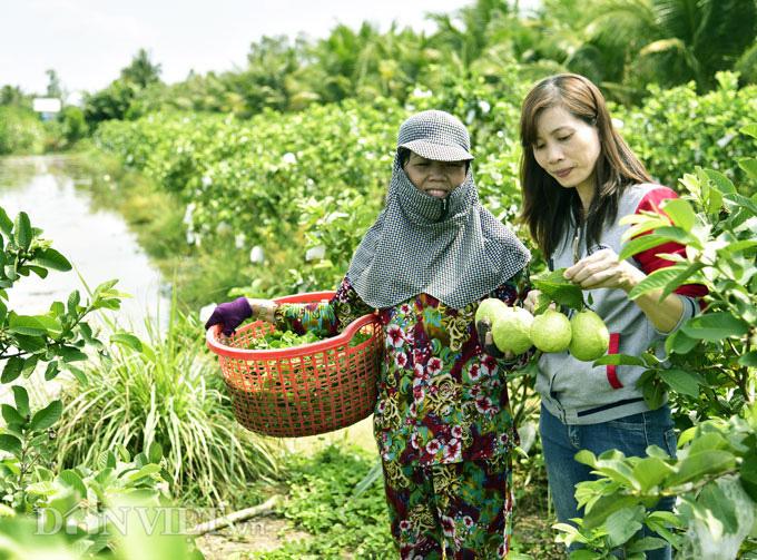 Từ công nhân trở về quê trồng ổi, rau thu nửa triệu/ngày - Ảnh 2.
